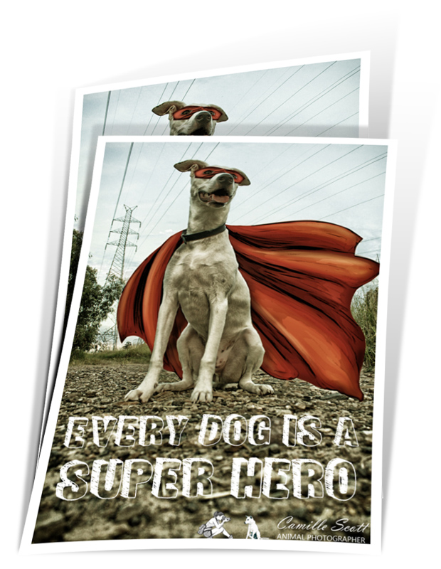 Camille Scott Animal Photographer Brisbane - Super Hero Poster Prints