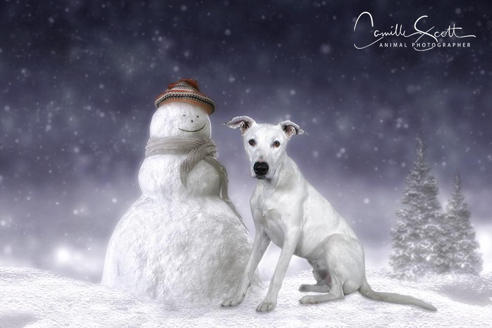 Christmas Dog Photography 2019 Camille Scott Photographer Brisbane