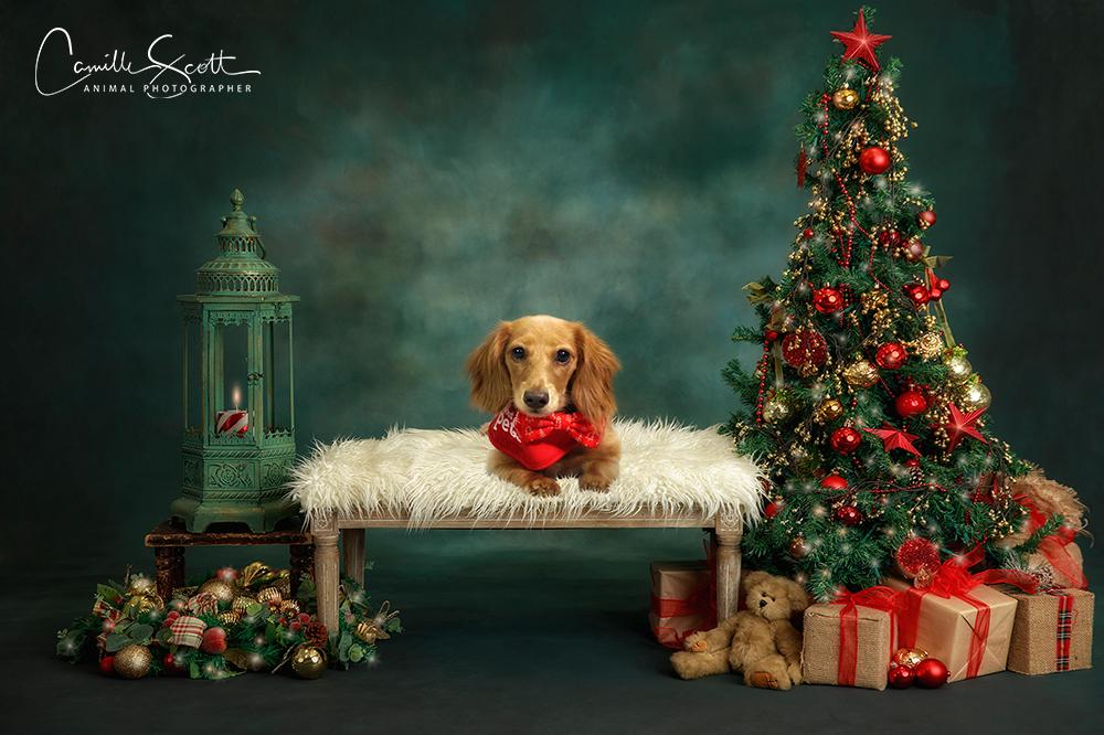 D2DR Christmas Fundraiser 2019 Camille Scott Photographer Brisbane